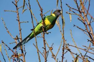 bird-watching-006