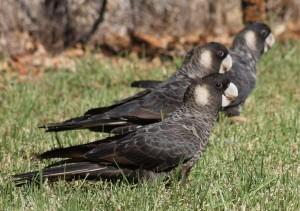 bird-watching-035